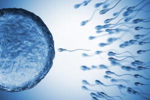Fertilità: gli ovociti scelgono gli spermatozoi da cui farsi fecondare